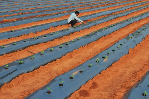 A farmer inspects saplings of eggplant growing in his field on the outskirts of Bangalore