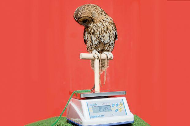 Weighing an owl
