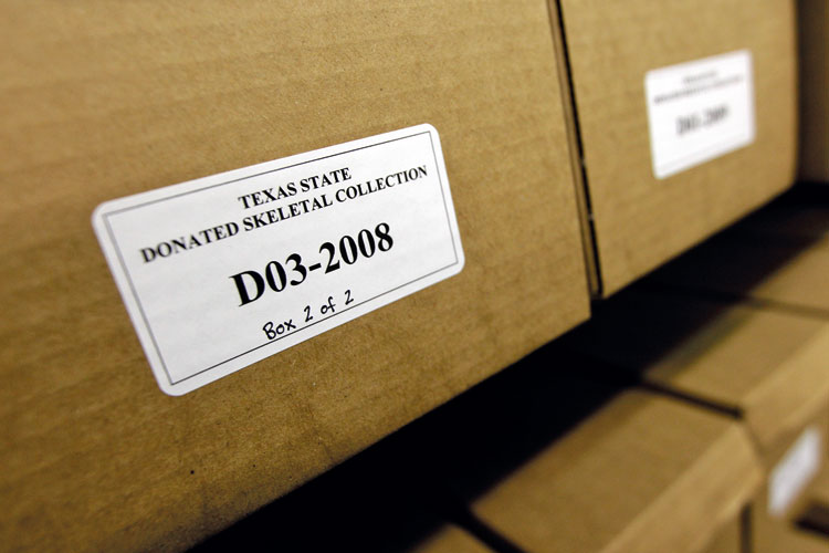 Texas State donated skeletal collection box